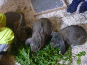 kaniner01